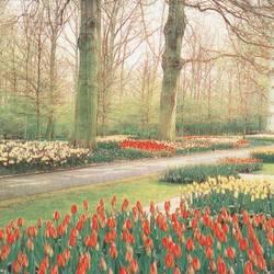 Springtime Gardens