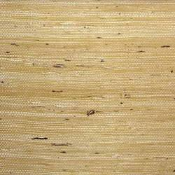 Yellow Ivory Fine Arrowroot - WND241