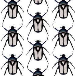 Beetle - Gray