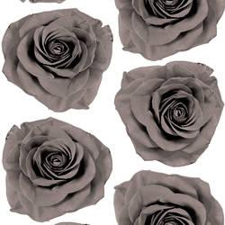 Rose Blossom - Gray