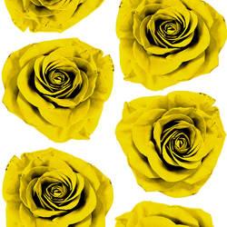 Rose Blossom - Yellow