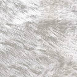 Wolf, Arctic