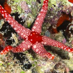 Starfish 3 Underwater - Beverly Factor