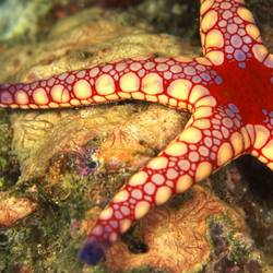 Starfish 9 Underwater - Beverly Factor
