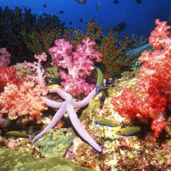 Starfish 10 Underwater - Beverly Factor