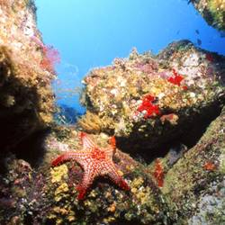 Starfish 14 Underwater - Beverly Factor
