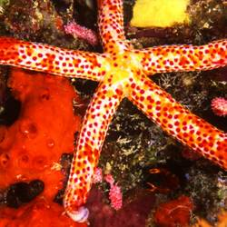 Starfish 17 Underwater - Beverly Factor