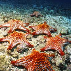 Starfish 19 Underwater - Beverly Factor
