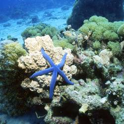 Starfish 22 Underwater - Beverly Factor