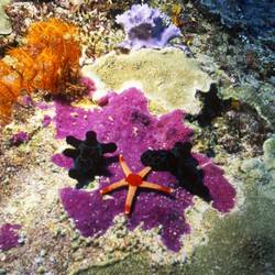 Starfish 24 Underwater - Beverly Factor