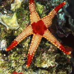 Starfish 29 Underwater - Beverly Factor