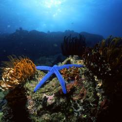 Starfish 31 Underwater - Beverly Factor