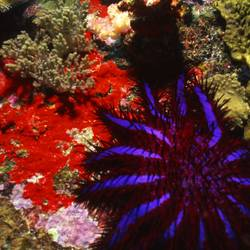 Starfish 32 Underwater - Beverly Factor