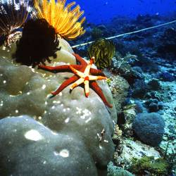 Starfish 33 Underwater - Beverly Factor