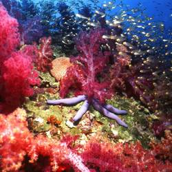 Starfish 37 Underwater - Beverly Factor