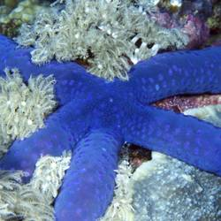 Starfish 41 Underwater - Beverly Factor