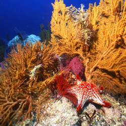 Starfish 51 Underwater - Beverly Factor