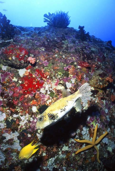 Starfish 54 Underwater - Beverly Factor