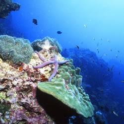 Starfish 57 Underwater - Beverly Factor