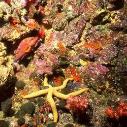Starfish 59 Underwater - Beverly Factor