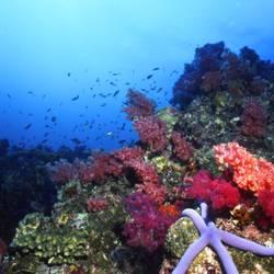Starfish 60 Underwater - Beverly Factor