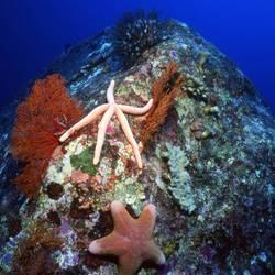 Starfish 61 Underwater - Beverly Factor