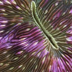 Underwater Abstracts 6 Underwater - Beverly Factor