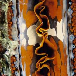 Underwater Abstracts 12 Underwater - Beverly Factor