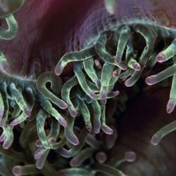 Underwater Abstracts 22 Underwater - Beverly Factor