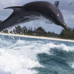 Dolphins 4 Underwater - Beverly Factor