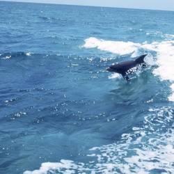 Dolphins 6 Underwater - Beverly Factor