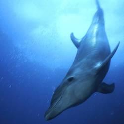 Dolphins 8 Underwater - Beverly Factor