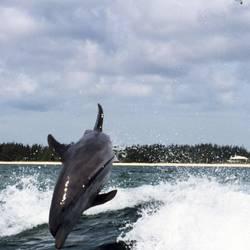 Dolphins 9 Underwater - Beverly Factor