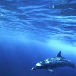 Dolphins 14 Underwater - Beverly Factor