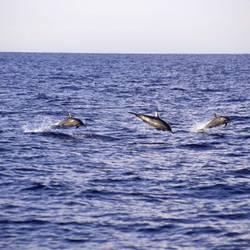 Dolphins 33 Underwater - Beverly Factor