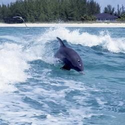 Dolphins 46 Underwater - Beverly Factor