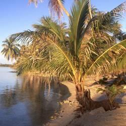 Islands And Sands 61 Underwater - Beverly Factor