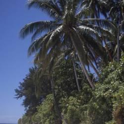 Islands And Sands 63 Underwater - Beverly Factor