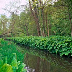 Stream flowing through a garden, Fairhaven Woodland and Water Garden, Norfolk, England