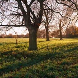 Bare trees on a landscape, Norfolk, England