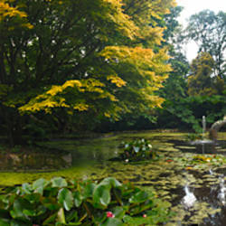 Pond with trees in autumn, Trewidden Garden, Penzance, Cornwall, England