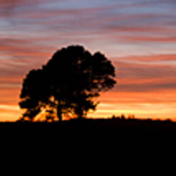 Silhouette of a tree at sunset, New Forest, Hampshire, England