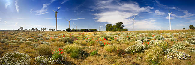 Wildflowers and wind turbines, East Somerton, Somerton, Norfolk, England