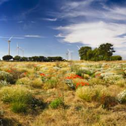 Wildflowers and wind turbines, East Somerton, Somerton, Norfolk, England