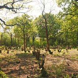 Deforestation at Honeypot Wood, Norfolk, England