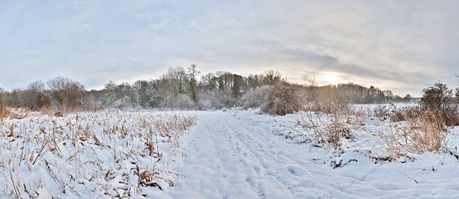 Bare trees on a snow covered landscape, Hapton, Norfolk, England