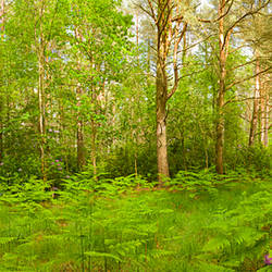 Trees with plants in a forest, Nomansland, New Forest, Hampshire, England