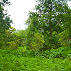 Trees with plants in a forest, One Tree Hill Country Park, Basildon, Essex, England