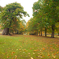 Sweet Chestnut trees in a park, Greenwich Park, Greenwich, Canary Wharf, London, England