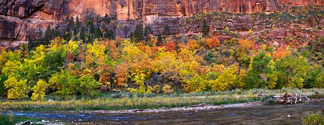 Virgin River at Big Bend, Zion National Park, Springdale, Utah, USA